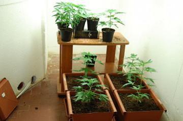 05_09_marijuana_polizia_web.jpg