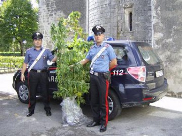 19_09_droga_marijuana_web.jpg