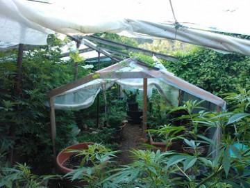 24_07_13_marijuana_web.jpg