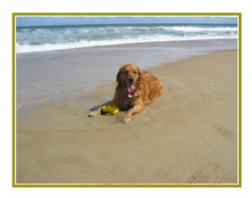 cane-in-spiaggia.jpg