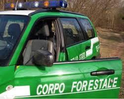 forestale.jpg