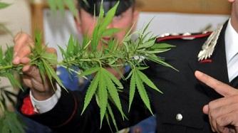 marijuana5.jpg