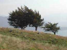 vento.jpg