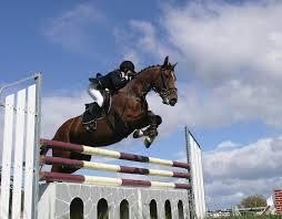 12_5_16_ equitazione