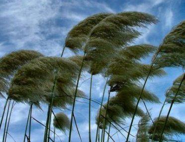 raffiche-di-vento